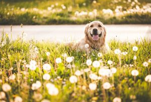 Can My Dog Have Allergies?