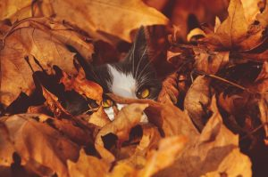 Fall Safety and Your Pet