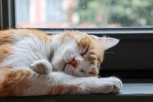 Snoring in Pets